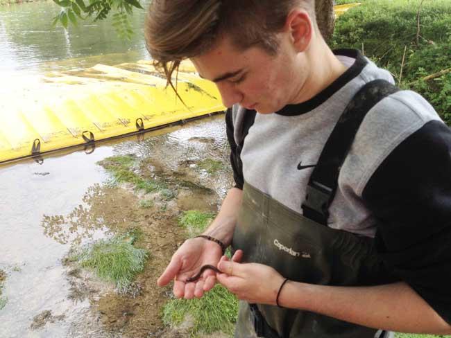 Pesca elettrica per spostare la fauna acquatica sul luogo di lavoro durante il lavoro.